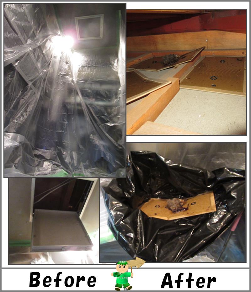 店舗天井裏のねずみ死骸回収