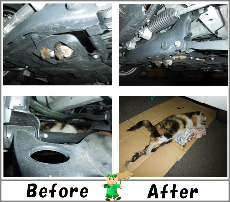 車両フレーム・エンジンルーム内に入り込んだ猫(ネコ)の死骸回収