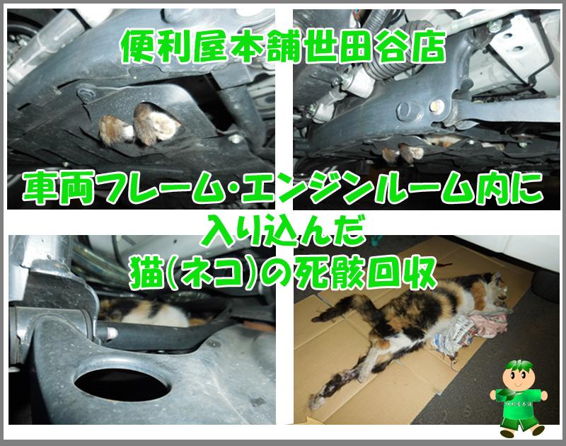 車両フレーム・エンジンルーム内に入り込んだ猫(ネコ)の死骸回収写真