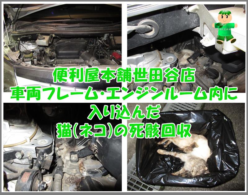 車両フレーム・エンジンルーム内に入り込んだ猫(ネコ)の死骸回収写真②