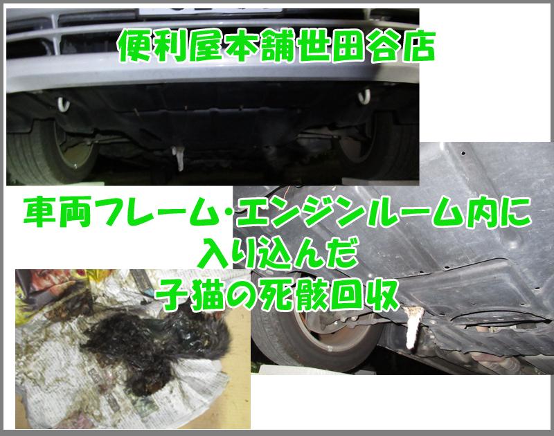 車両フレーム・エンジンルーム内に入り込んだ子猫(ネコ)の死骸回収写真④