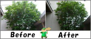 樹木の枝切り