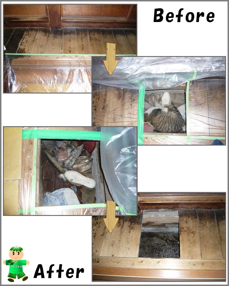 床下のねこの死骸回収・害虫駆除・消毒・清掃