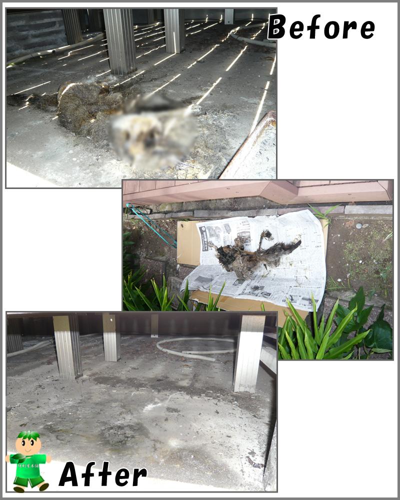 ウッドデッキ下のねこの死骸回収・消毒・害虫駆除・清掃