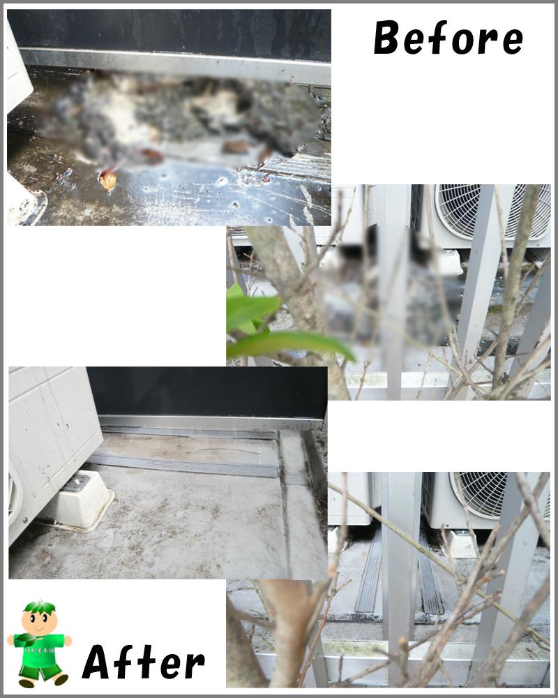 マンションベランダでのねこの死骸回収・害虫駆除・消毒・洗浄クリーニング